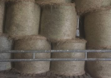 Hay Forsale – Top Quality – Delivered – Round Bales