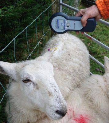 TraKing Eid Tag Reader Sheep/Cattle