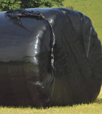 2019 Silage for sale