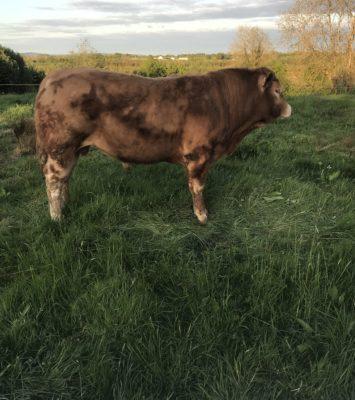 P.b.n.r lim bull