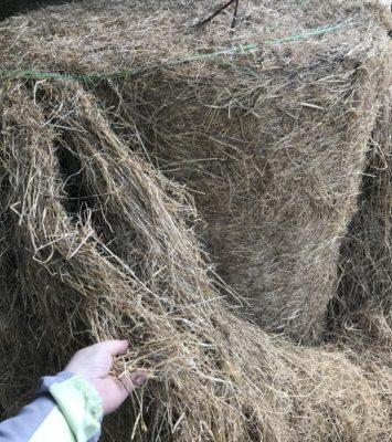 Hay bales – good condition