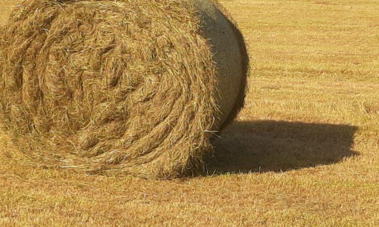 Good quality hay