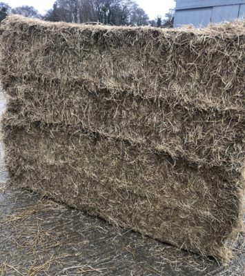Top Quality hay forsale