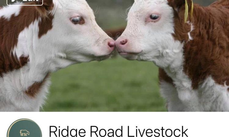 Ridge Road Livestock