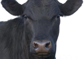 Darragh Purcell Livestock Ltd.
